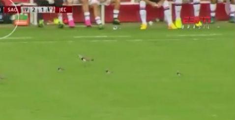 Birds invade pitch
