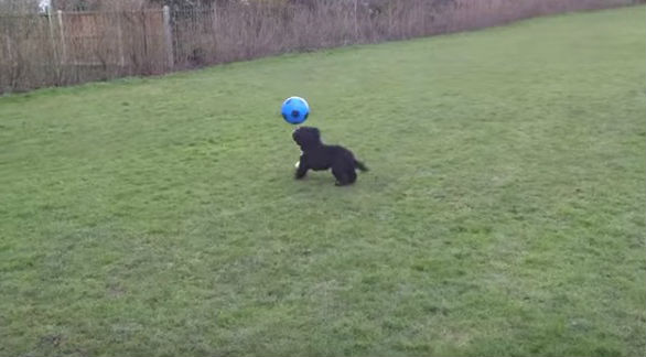 This still image doesn't do the Ronaldog skills demonstration justice