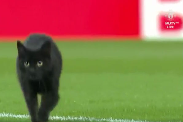 Black cat on pitch at Anfield before Liverpool vs Manchester United