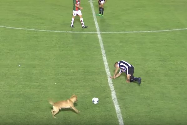 A dog tackles a player from behind during a game in Argentina
