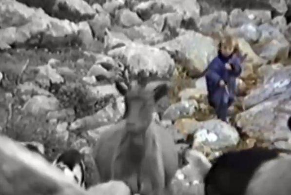 Five-year-old Luka Modrić herds goats in old Croatian wildlife documentary