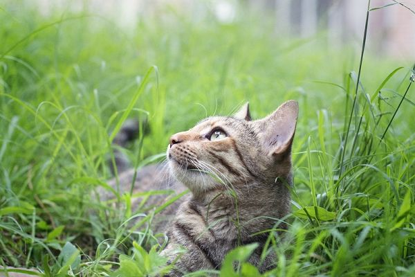There were cats mating at Vasco da Gama, in the grass