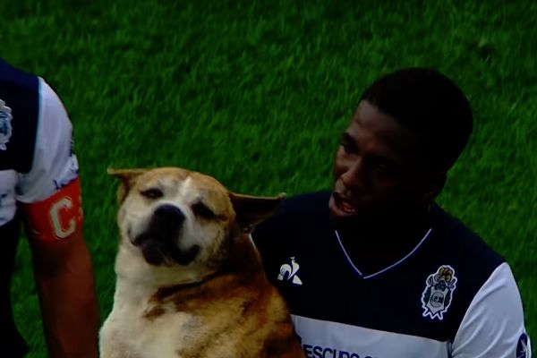 GELP's Jan Hurtado carries a dog off the pitch during a match at Unión de Santa Fe