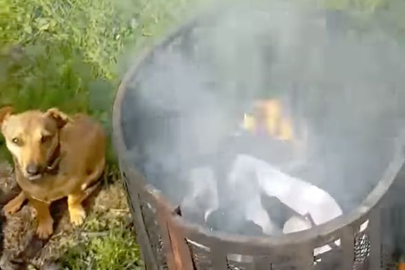 A fan burns Newcastle shirts in the garden after their defeat to Man Utd at Old Trafford