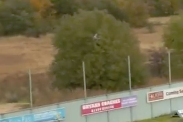An Ayr fan ejected from Falkirk Stadium watches the game after climbing a tree