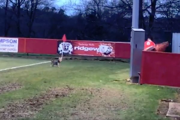 Dog pitch invader at Tunbridge Wells vs Chatham Town