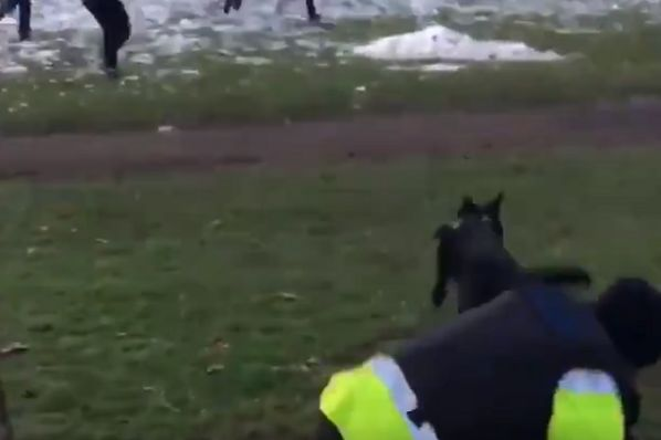 Police dog drags officer over a wall in pursuit of another dog during fan trouble after Bristol City 2-0 Swansea