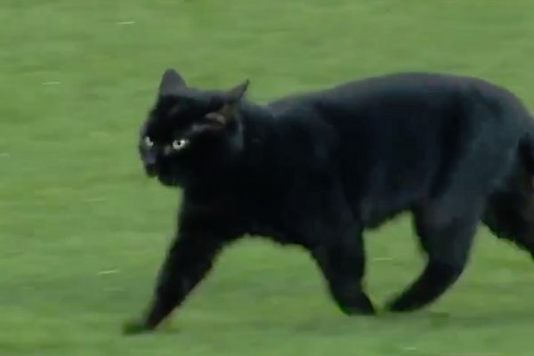 A black cat on the pitch at Goodison Park during Everton 1-3 Wolves
