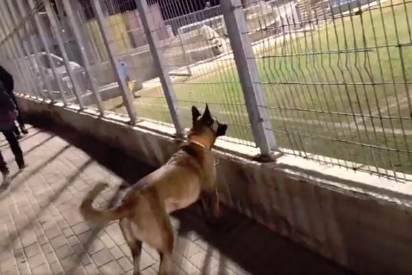 A dog follows the ball from behind a fence during a Liga Bet South B game in Israel