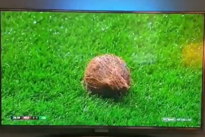 Coconut on pitch at Heart during Edinburgh derby defeat to Hibernian