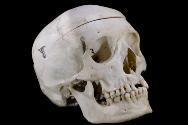 This is not the skull of the Racing fan's grandfather that he brought to the title celebrations