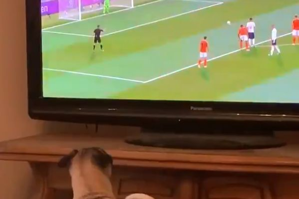 Frank the dog watches Marcus Rashford's penalty for England against Holland in the Nations League
