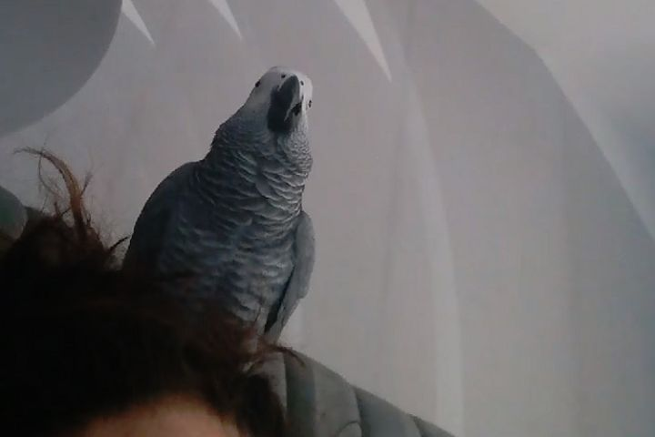 Parrot sings Mohamed Salah song