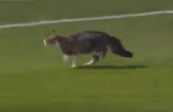 Cat invades pitch during Leagues Cup quarter-final between Real Salt Lake and Tigres