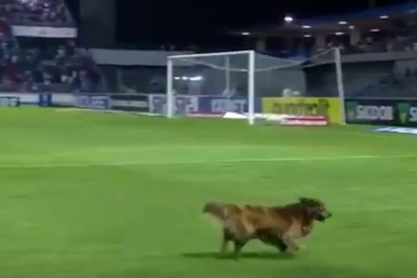 Dog invades pitch during 1-1 draw between CSA and Cruzeiro