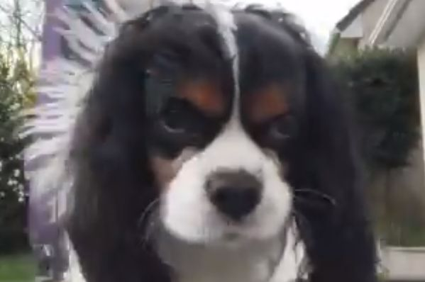 Dog goes to pee on camera which man is using to film himself doing kick-ups with a toilet roll