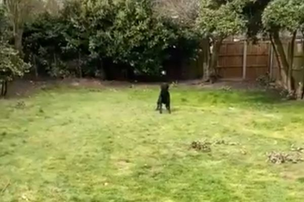 Nottingham Forest's Joe Lolley plays catch with his nearly blind dog