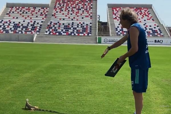 Flamengo manager Jorge Jesus tries to clear an iguana from the pitch for a training session
