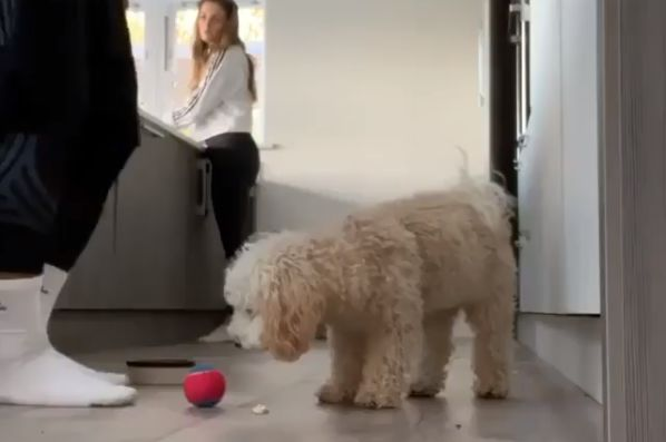 Jeremy Lynch of F2Freestylers nutmegs his dog at home