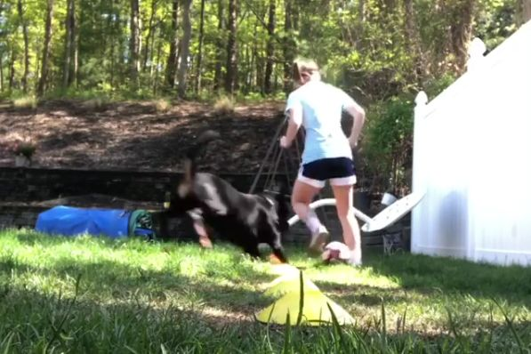 Dog knocks over girl during training session in the garden