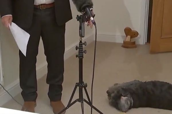 Jeff Stelling's dog Stan interrupts him while he records Soccer Saturday from home