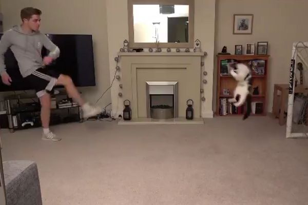 Goalkeeping cat saves shots from YouTuber ChrisMD