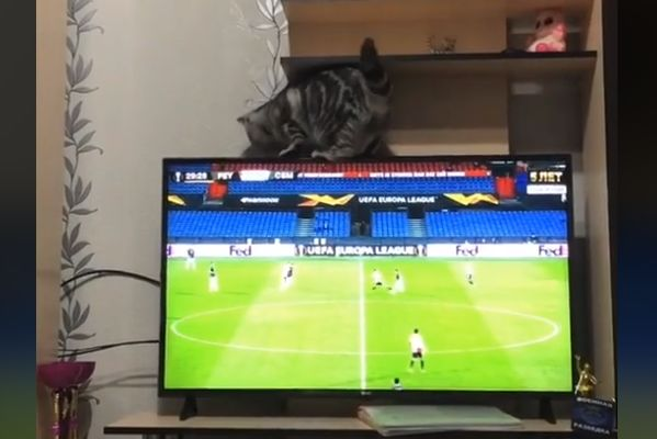 Fan's cat knocks television over during Feyenoord vs CSKA Moscow in the Europa League