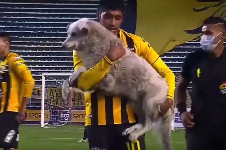 Dog carrying a boot invades the pitch during The Strongest vs Nacional Potosí