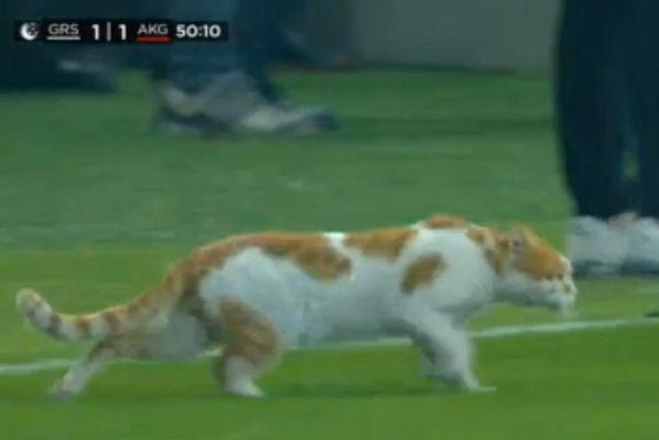 Cat on pitch at Giresunspor vs Keçiörengücü