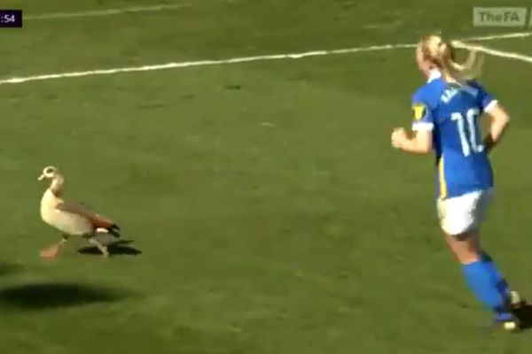 Geese invade pitch at People's Pension Stadium during Brighton and Hove Albion vs Manchester United in the Women's Super League