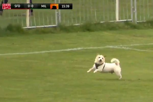 One of the two pitch-invading dogs at Seaford Town